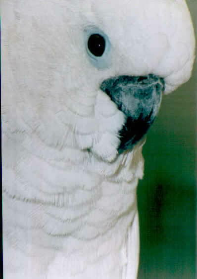 "The image ""http://www.livingpictures.org/imagespets/bird%20pets/parrotface1.jpg"" cannot be displayed, because it contains errors."